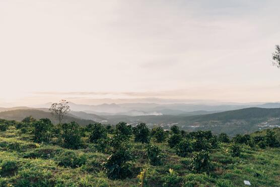 coffee_farm